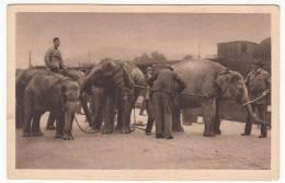 CIRCUS - Zirkus Willy Hagenbeck, Elefanten Transport, Elephants - Circus