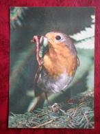 European Robin - Erithacus Rubecula - Birds - 1987 - Estonia - USSR - Used - Oiseaux