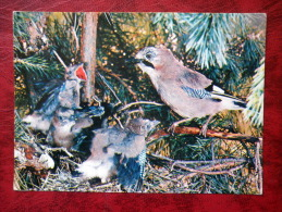 Eurasian Jay - Garrulus Glandarius - Birds - 1982 - Russia - USSR - Used - Oiseaux