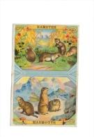 Chromo Chicorée Bergère Bonzel Haubourdin Hamster Et Marmotte - Chromos