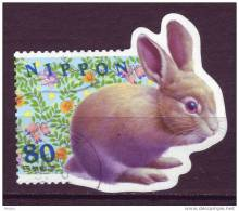 Japon, Lapin, Rabbit, Japan, Rose - Rabbits
