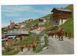 CP 10*15/S477/SAINT VERAN TROUPEAU DE VACHES - Autres Communes