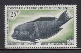New Caledonia MNH Scott #C43 25fr Coris Angulata - Adult Fish - Poste Aérienne