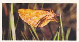 Brooke Bond Vintage Trade Card Woodland Wildlife 1980 No 30 Bordered White Moth - Tea & Coffee Manufacturers