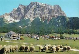 Ehrwald - Mit Zugspitzmassiv - Tirol - Österreich