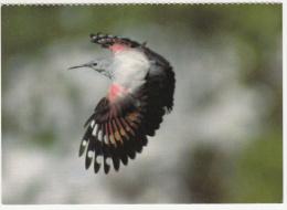 Oiseaux - Mauerlaufer - Tichodrome échelette -Picchio Muraiolo-Tichodroma Muraria-Editeur:Ligue Suisse Protection Nature - Birds