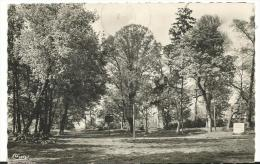 R : Val De  Marne :  SUCY  En  BRIE  :  Parc  Montaleau  1952 - Sucy En Brie