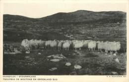 Réf : BO-13-188 :  Groenland Troupeau De Moutons - Greenland