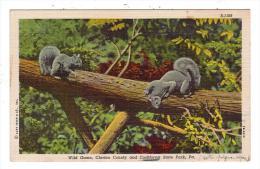AMERIQUE/Etats-Unis/PA/Wi Ld Game County And Cookforest State Park/Réf:4057 - Etats-Unis