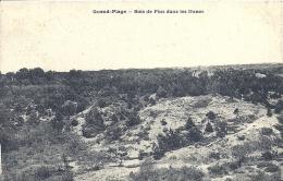 PICARDIE - 80 - SOMME - QUEND - PLAGE - Bois De Pins Dans Les Dunes - Quend