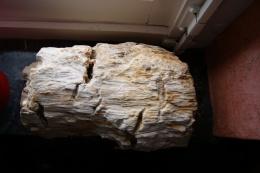 Tr�s joli bois fossil� trouv� dans le sol � La CALAMINE. Pi�ce rare plus de 4 kg.