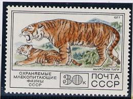 RUSSIA  -  TIGRE - Big Cats (cats Of Prey)