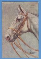 CAVALLI -  ORIGINAL  VINTAGE POSTCARD. - Horses