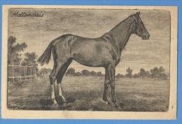 CAVALLI  HOLLANDAIS-  ORIGINAL  VINTAGE POSTCARD. - Horses