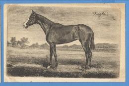 CAVALLI  ANGLAIS - ORIGINAL  VINTAGE POSTCARD. - Horses