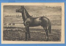 CAVALLI  TROTTEUR AMERICAIN - ORIGINAL  VINTAGE POSTCARD. - Horses