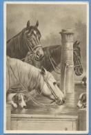 CAVALLI E CANI - ORIGINAL  VINTAGE POSTCARD. - Horses