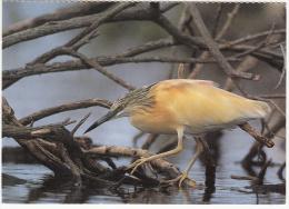Oiseaux - Rallenreiher - Crabier Chevelu - Sgarza Ciuffetto - Ardeola Ralloides -Editeur:Ligue Suisse Protection Nature - Pájaros