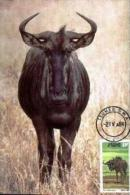 SOUTH WEST AFRICA, 1984, Wildebeest 11 Cent,  Mint Maxicards, Nr(s.) 9 - Namibia (1990- ...)