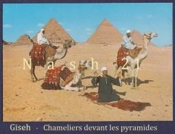 CPM - Carte Postale - Egypte - Giseh - Chameliers Devant Les Pyramides - - Gizeh