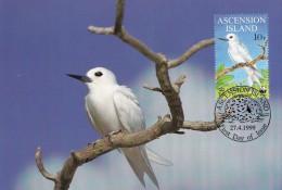 WWF - 250,32 - € 2,83 - D' CM-MC - 27-4-1999 - 10 P - Fairy Tern - Ascension 1252212 - W.W.F.