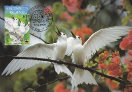 WWF - 250,33 - € 3,00 - D' CM-MC - 27-4-1999 - 10 P - Fairy Tern - Ascension 1252212 - W.W.F.