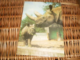 Postkarte Postcard Rhinoceros - Rinoceronte