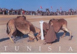 Tunisie Festival De Douz - Tunisie