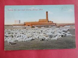 Billings,MT--Feeding Pen, Beet Sugar Factory--cancel 1909--PJ 109 - Billings