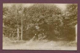 """BEAUMONT-SUR-OISE  (95) : """" LA FORET DE CARNELLE """" - Beaumont Sur Oise"""
