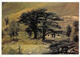 Asie > Les Cèdres Du LIBAN - The Cedars Of LEBANON (Editions : ARLI Lebanon - Photo CNTL CP-10.7)*PRIX FIXE - Liban