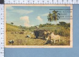 S3996 JAMAICA REAPING SUGAR CANE AZUCAR SUCRE VG FP - Jamaica