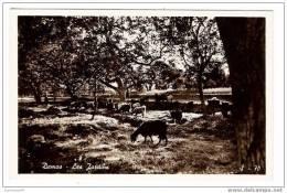 SYRIE  /  DAMAS  /  LES  JARDINS  ( Troupeau De Chèvres ) /  Edition  GULEF   N° S-70 - Syrie