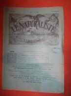 """Revue """"LE NATURALISTE"""" N°357 Du 15/01/1902 Evolution Ammonites Du Crétacé, Coléoptères Brésiliens, - Wetenschap"""
