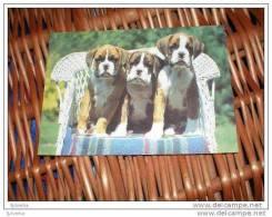 Hund Dog Boxer Postkarte - Chiens