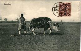 1PC  Farming  A Bullock  Harrowing - China