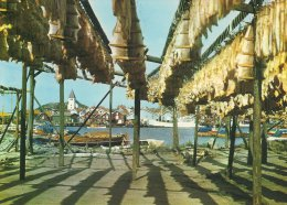 Sweden  Drying Fish In Bohuslän.  A-2085 - Pêche