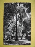 GUINEE FRANCAISE. Un Village Sous Les Palmes. - French Guinea