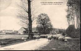 La Vie Aux Champs, En Bourgogne Le Retour à L'étable Au Déclin Du Jour - France