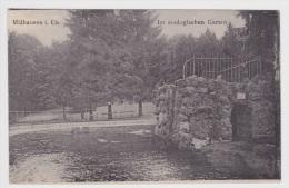 MULHOUSE - LE PARC ZOOLOGIQUE - I. Els - Mulhouse