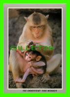 MONKEYS - THE OMNISCIENT THAI MONKEY - THE MONKEY IS CASHING LICE - - Singes