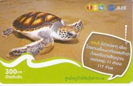 TARJETA DE TAILANDIA DE UNA TORTUGA (TURTLE) - Turtles
