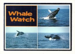 Cp, Animaux, Baleines, Whale Watch, Multi-Vues, Voyagée 1994 - Dieren