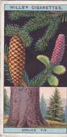 Wills Vintage Cigarette Card Flowering Trees &amp  Shrubs 1924 No 43 Norway Spruce - Wills