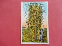 Hialeah,FL--sugar Cane On Plantation Of Pennsylvania Sugar Company--not Mailed--PJ114 - Non Classés