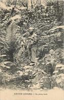 Mai13 1556 : Grande Comore  -  Forêt - Comores