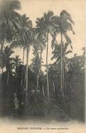 Mai13 1558 : Grande Comore  -  Cocotiers Centenaires - Comores
