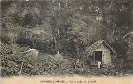 Mai13 1559 : Grande Comore  -  Lisière De La Forêt - Comores