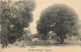 Mai13 1562 : Grande Comore  -  Manguier - Comores