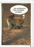 SINGES -  Les Enfants !...  J En Ai Plein Le Dos !.. - Monkeys